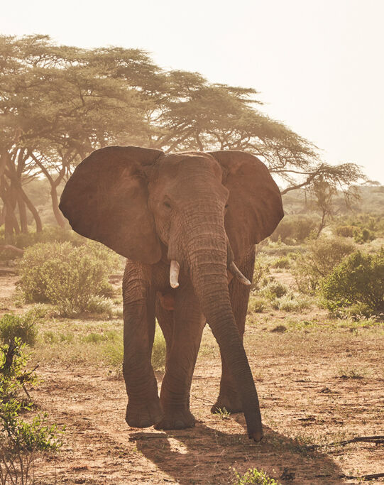 Ol Malo, Kenia