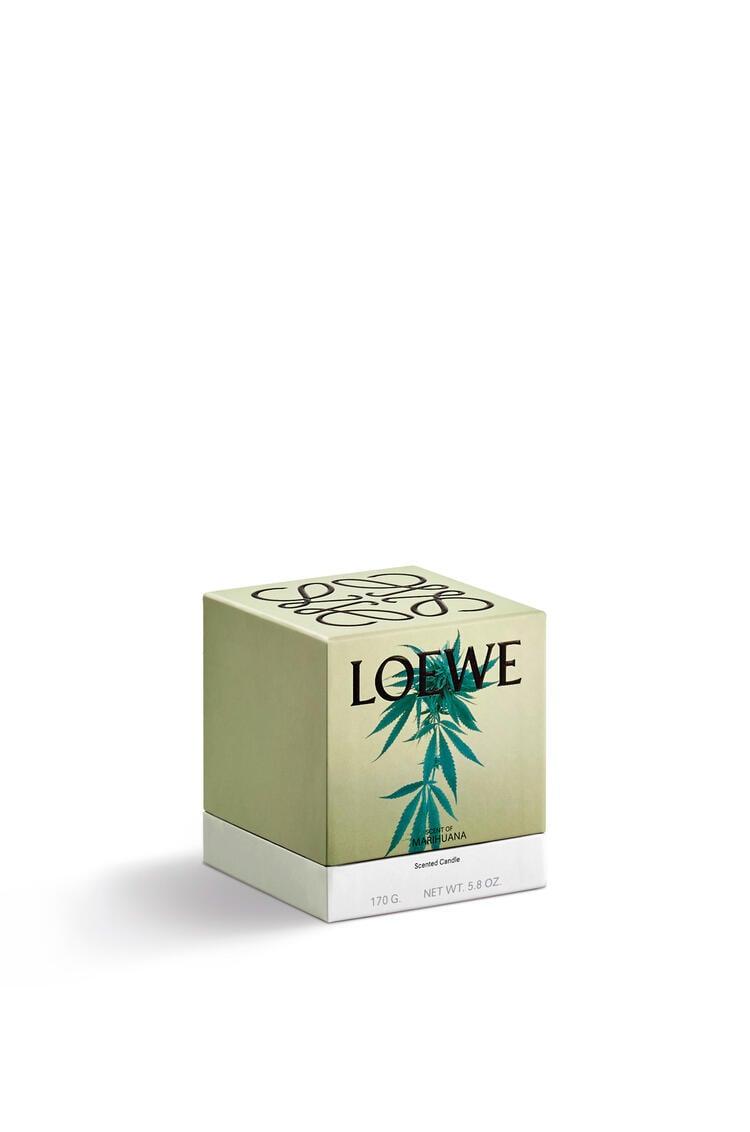 LOEWE Vela Scent of Marihuana Verde Oscuro pdp_rd